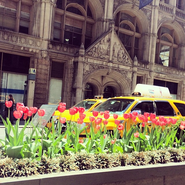 Photo of the Day: Tulips on Park Avenue