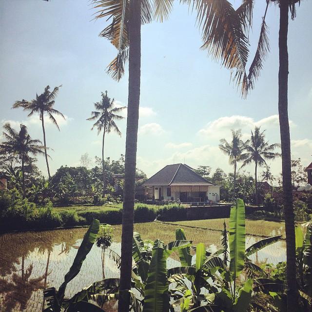 Last Day: Day 8 in Bali