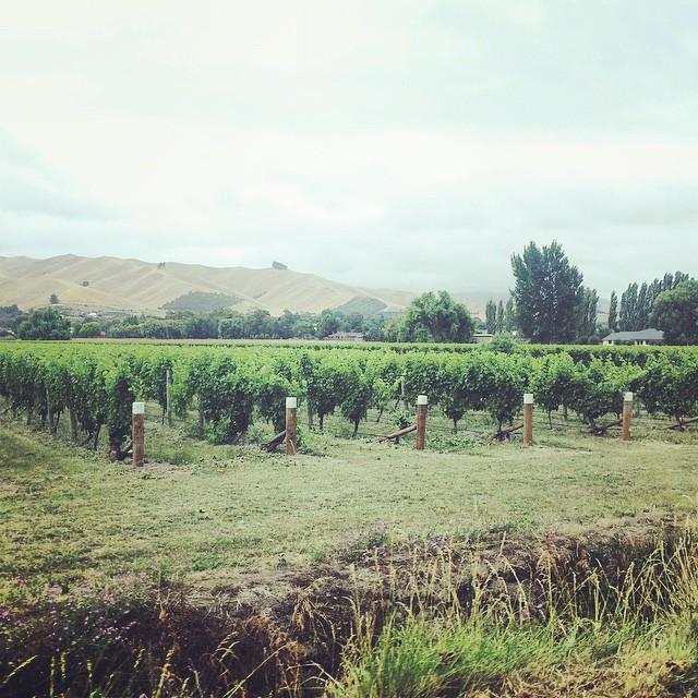 Marlborough Wine Region: Day 15 in New Zealand