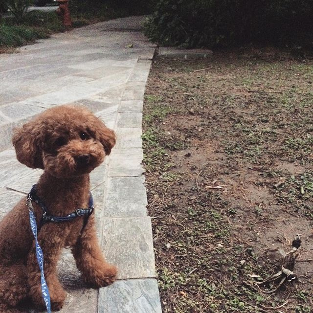 Walking The Dog in Shanghai: Happy National Dog Day