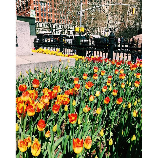 Photo of the Day: Flatiron Spring Flowers