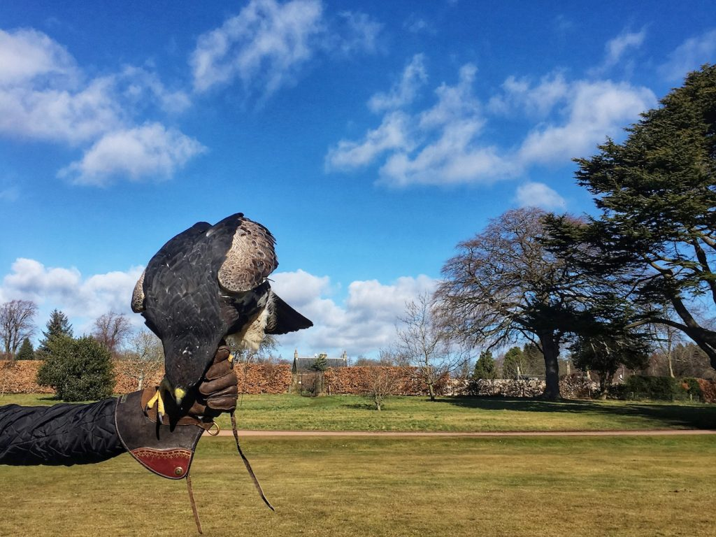 winton castle falconry